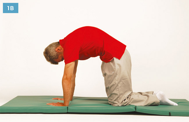 Ćwiczenie w klęku podpartym unosząc głowę do góry i wypychając środkową część kręgosłupa