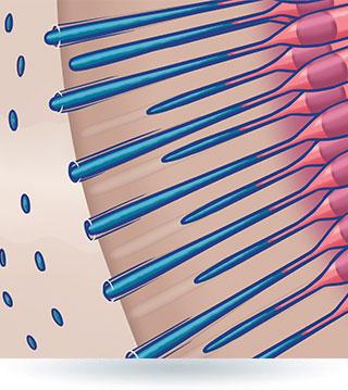 Kanaliki zębiny